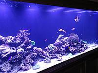 Морской аквариум под ключ