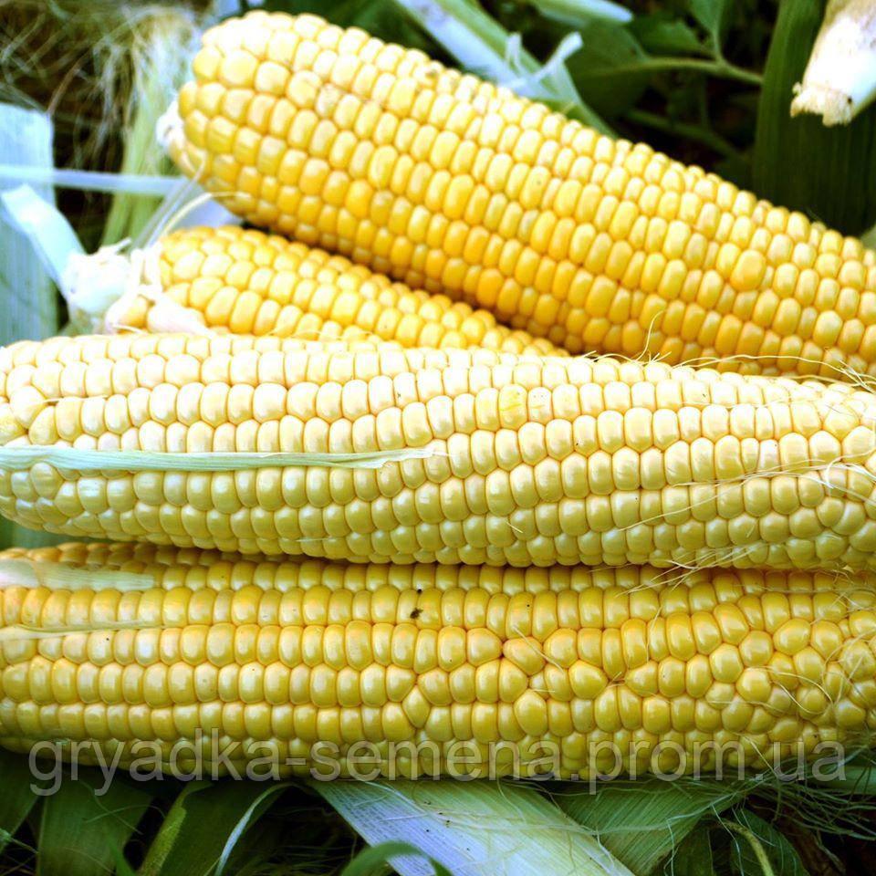 Кукуруза Форвард F1 (1709 F1) Lark seeds 2500 семян