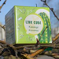 Набор для выращивания Эко Live Cube КАКТУС Эко куб. Семена кактуса. Кактус в горшочке. Кактуса на подоконнике
