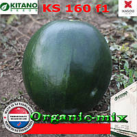 Арбуз КS 160 F1, 100 семян, KITANO SEEDS (Нидерланды)