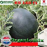 Семена, арбуз КS 160 F1, 100 семян, KITANO SEEDS (Нидерланды), фото 2