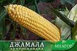 Цукрова кукурудза Джамала F1, Sh2-тип, 1000 насінин на 1.5 сотки,  73-75 днів, фото 3