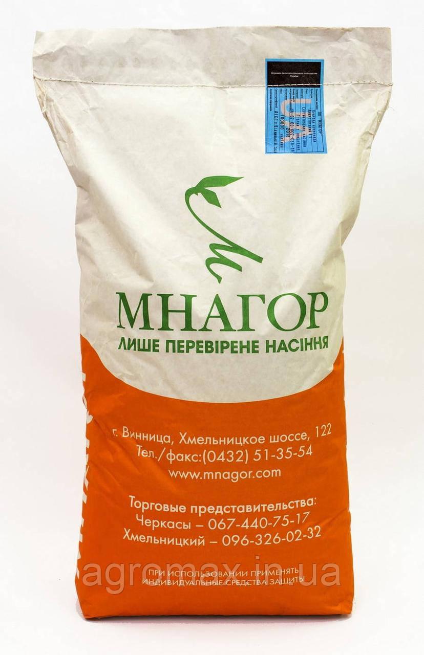 Солодка кукурудза Білий Кролик F1, Sh2-тип, молочно-біле зерно, 100 000 насінин на 1.5 га, 72-74 днів
