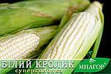 Солодка кукурудза Білий Кролик F1, Sh2-тип, молочно-біле зерно, 100 000 насінин на 1.5 га, 72-74 днів, фото 3