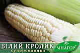 Солодка кукурудза Білий Кролик F1, Sh2-тип, молочно-біле зерно, 100 000 насінин на 1.5 га, 72-74 днів, фото 5