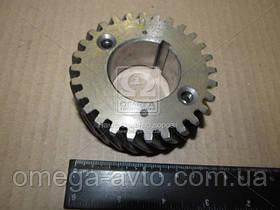 Шестерня валу колінчатого ГАЗ 2410, 3302 (ЗМЗ) 24-1005031