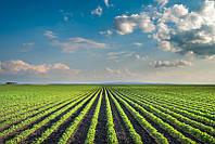 Оценка права пользования земельным участком