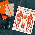 Большой атлас анатомии человека, фото 2