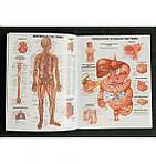 Большой атлас анатомии человека, фото 3