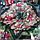 Народный платок Мария, 110х110 см, зеленый, фото 2