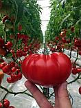 Сарра F1 10 шт семена томата Clause Франция, фото 2