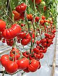 Сарра F1 10 шт семена томата Clause Франция, фото 3