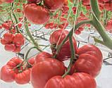 Сарра F1 10 шт семена томата Clause Франция, фото 4