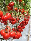 Сарра F1 насіння томату 250 шт Clause, Франція, фото 3