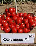 Солероссо F1 семена томата 1000 шт Nunhems Голландия, фото 6