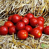 Солероссо F1 семена томата 1000 шт Nunhems Голландия, фото 7
