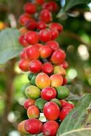 Кофе Yemen Matari
