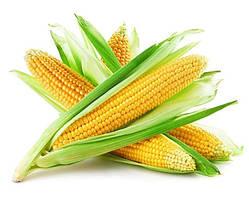 Кукуруза НС 2060 Сады Украины