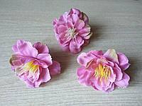 Яблоневый цвет розовый