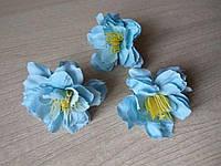 Яблоневый цвет голубой