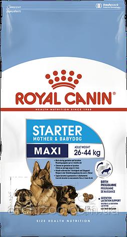 Royal Canin Maxi Starter 1кг для щенков средних пород до 2 месяцев, беременных и кормящих сук, фото 2