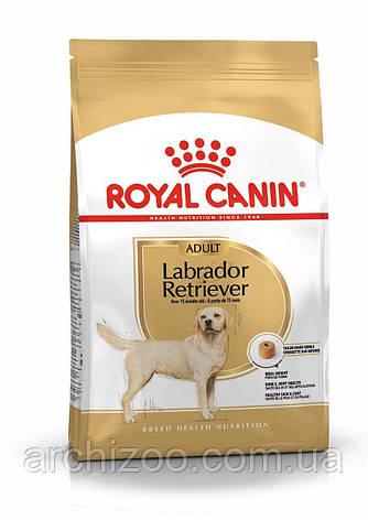 Royal Canin Labrador Retriever Adult 3 кг для взрослых лабрадоров, фото 2