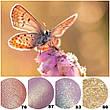 Пигмент для макияжа Shine Cosmetics №83, фото 4