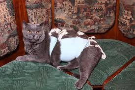 Стерелизация кошек