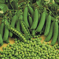 Семена гороха Альфа ( весовые от производителя) на микрозелень