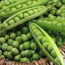 Семена Гороха Фаворит оптом в Украине на микрозелень