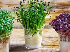 Семена на микрозелень
