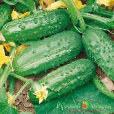 Весовые семена Огурца Солнечный на микрозелень