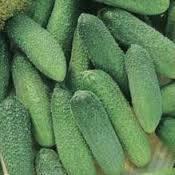 Семена капусты Амагер на микрозелень