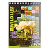 Блокнот А6 Микс 60л                                                                        Артикул: ВА6460-099, фото 2