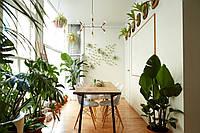 7 простых комнатных растений, которые украшают ваш дом