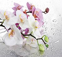 ЗД Фотообои Орхидеи  арт. 35029