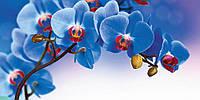 ЗД Фотообои Синяя Орхидея  арт. 35030