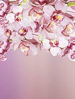 ЗД Фотообои Нежные Орхидеи  арт. 35040