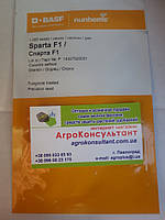 Семена огурца Спарта F1 (Nunhems) 1000 семян — пчелоопыляемый, ультра-ранний гибрид (40-42 дня)