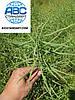 """Урожай 2019 года уже на складе ООО """"АВС Стандарт"""" - Классический яровой рапс Сириус ранний 85-95 дней. Гибрид урожайный 40-45 ц/га Сириус олийный 47%. Устойчив к засухе и приморозкам."""