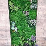 Фитостена з моху, фото 2