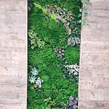 Фитомодули из мха и искусственных растений, фото 2