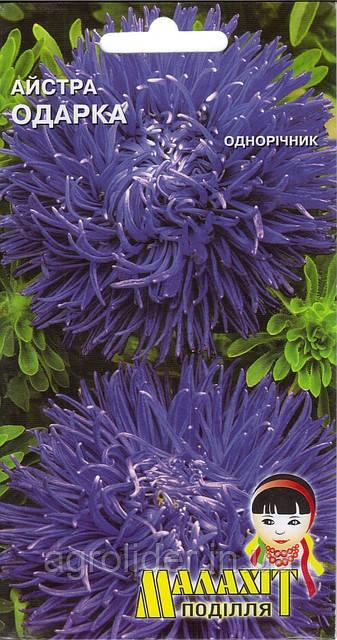 Семена цветов Астра Одарка 0.5г (Малахiт Подiлля)