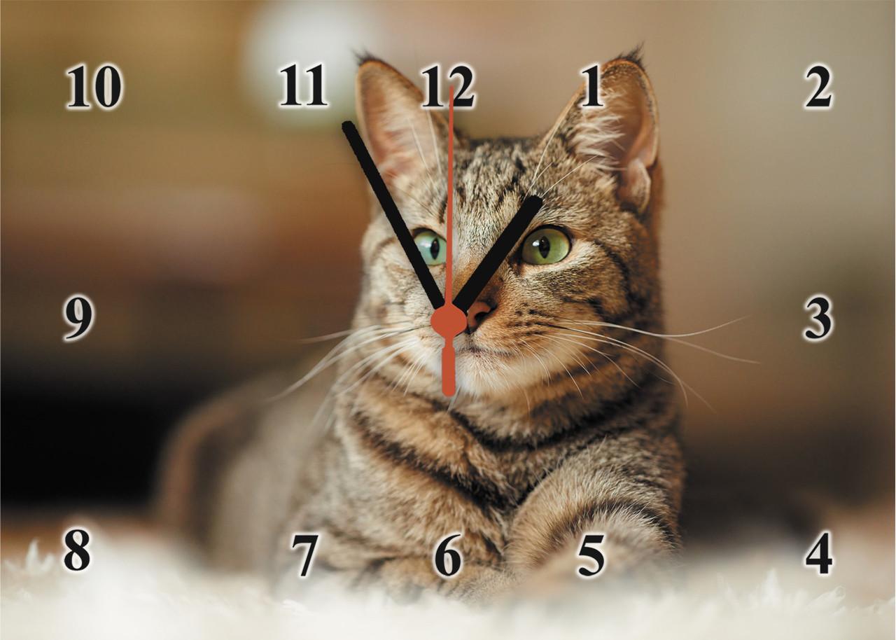 """Годинники настінні із скла Зеленоокий кіт"""""""
