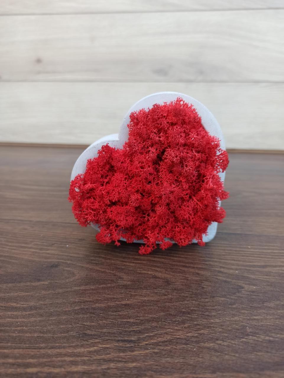 Серце з моху, гіпсове кашпо у формі серця з червоним мохом