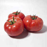 Семена томата индетерминантного KS 1157 F1(Kitano) 100с