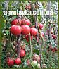 Семена томата детерминантного КАСАМОРИ F1(Kitano) 100с