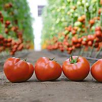 Насіння томату KS 204 F1 (Kitano) 500c