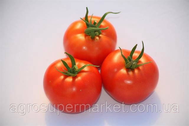 Семена томата S.C. 2121  ультраранний BT TOHUM, 10гр
