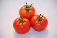 Семена томата S.C. 2121  ультраранний BT TOHUM, 10гр, фото 1